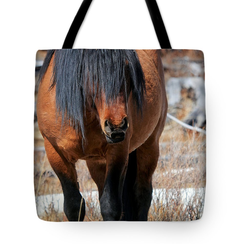 Ghost Forest Tote Bag featuring the photograph Shaggy Stallion by James Anderson