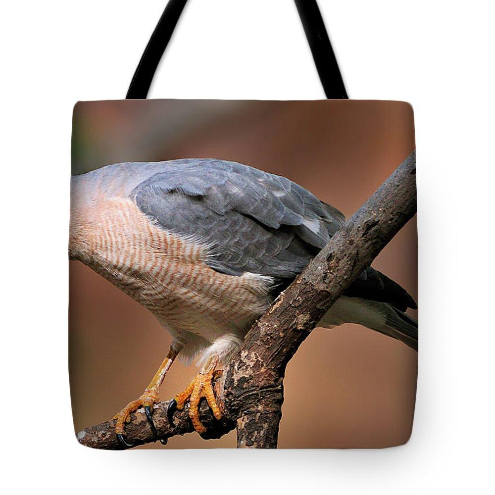 Ranthambore National Park Tote Bag featuring the photograph Shikra by Copyright@jgovindaraj