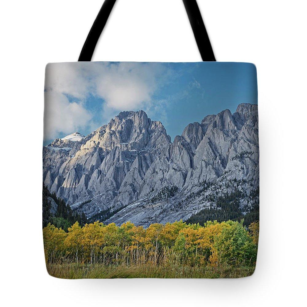 Poplars Tote Bag featuring the photograph Shining Poplars by Dan Jurak
