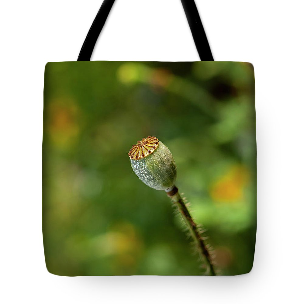 Shirley Poppy Tote Bag featuring the photograph Shirley Poppy 2018-20 by Thomas Young
