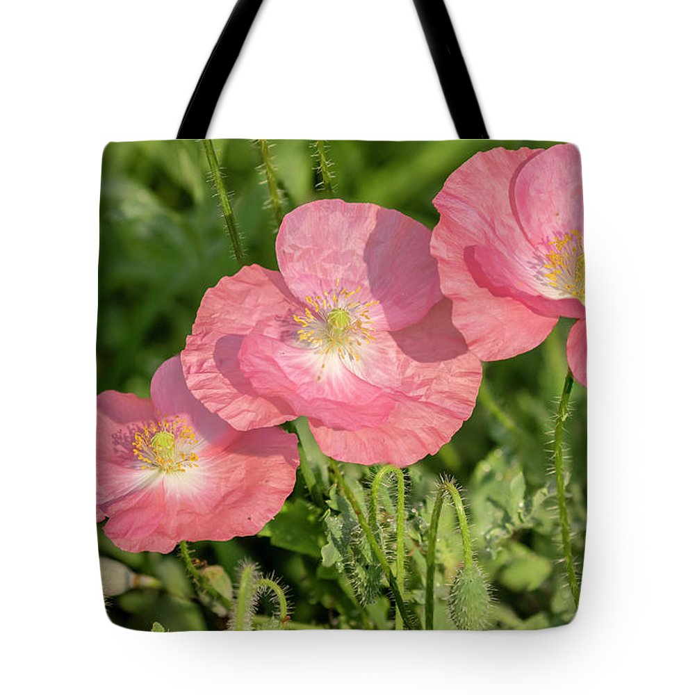 Shirley Poppy Tote Bag featuring the photograph Shirley Poppy 2018-21 by Thomas Young