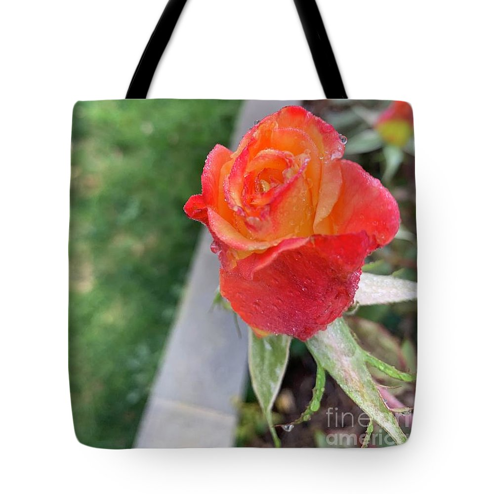 Nature Photo Tote Bag featuring the photograph Single Rose by Epic Luis Art