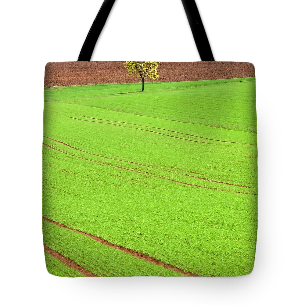 Outdoors Tote Bag featuring the photograph Single Tree In Green Field by Henglein And Steets