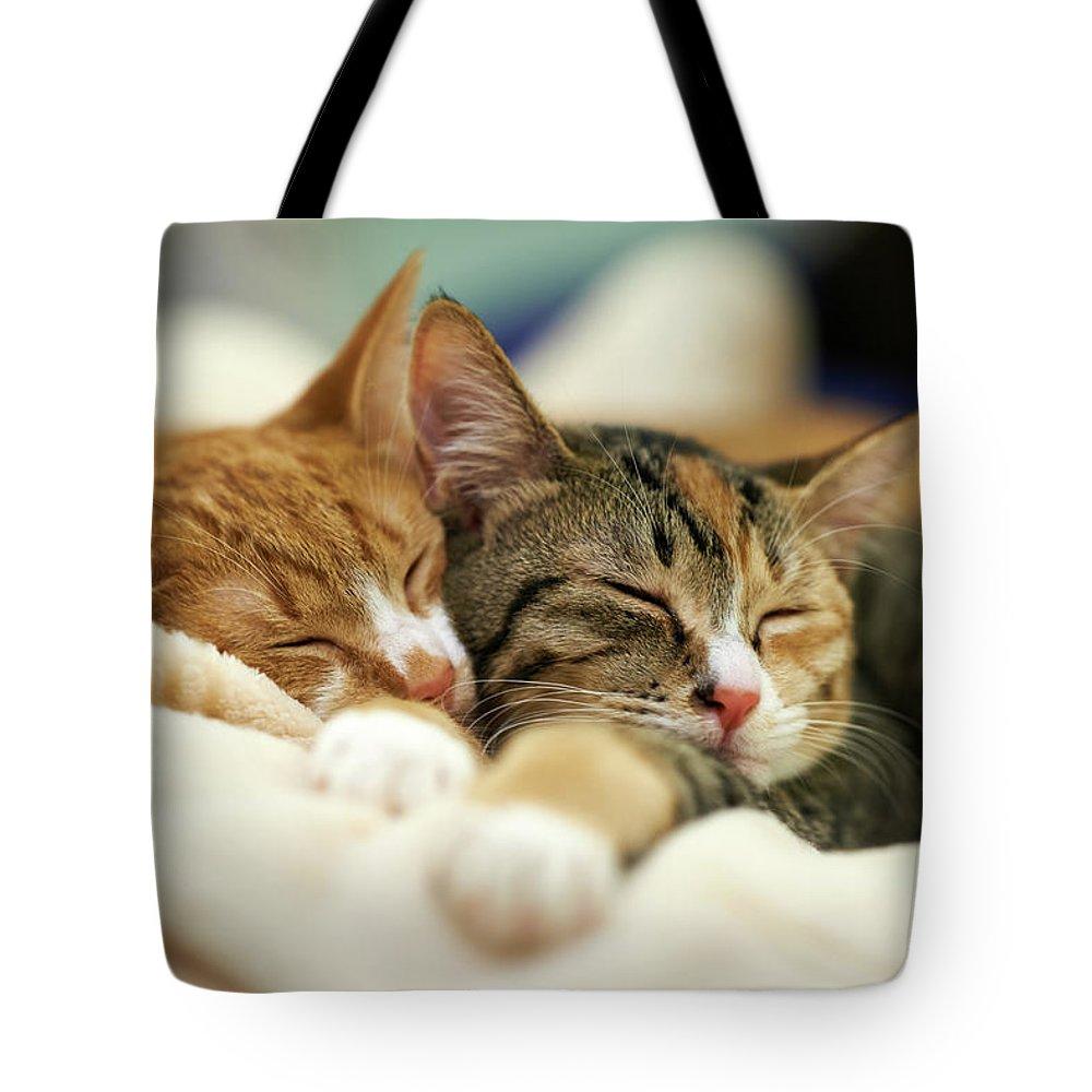 Shimonoseki Tote Bag featuring the photograph Sleeping Kittens by Akimasa Harada
