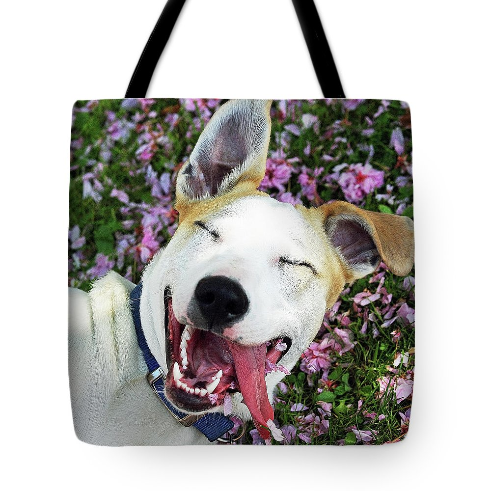Pets Tote Bag featuring the photograph Smiling Dog by Fork