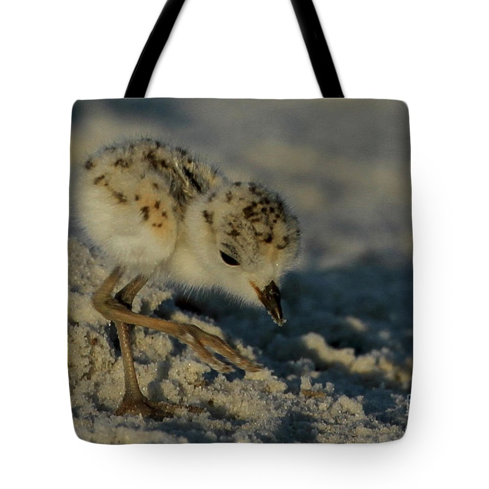 Snowy Plover. Animals Tote Bag featuring the photograph Snowy Plover On The Hunt by Meg Rousher