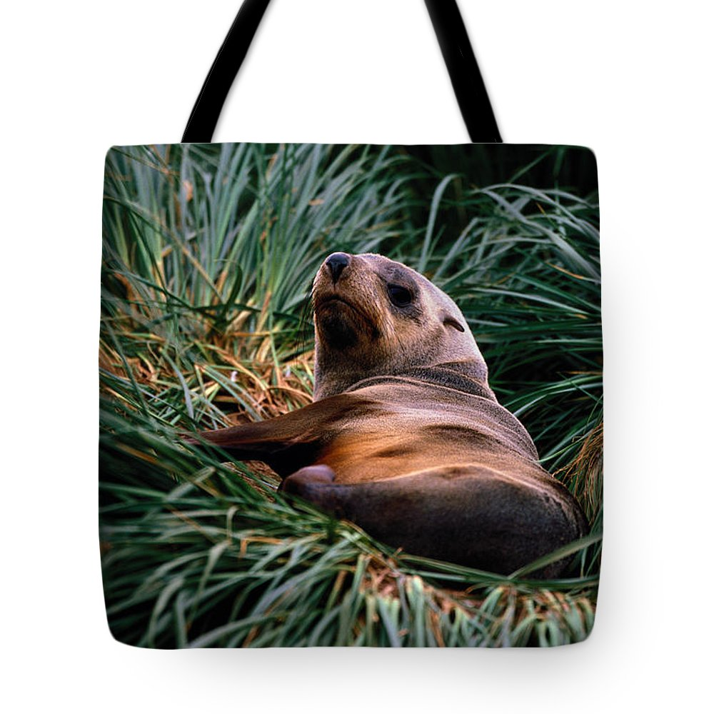 Grass Tote Bag featuring the photograph Southern Fur Seal Arctocephalus Gazella by Art Wolfe
