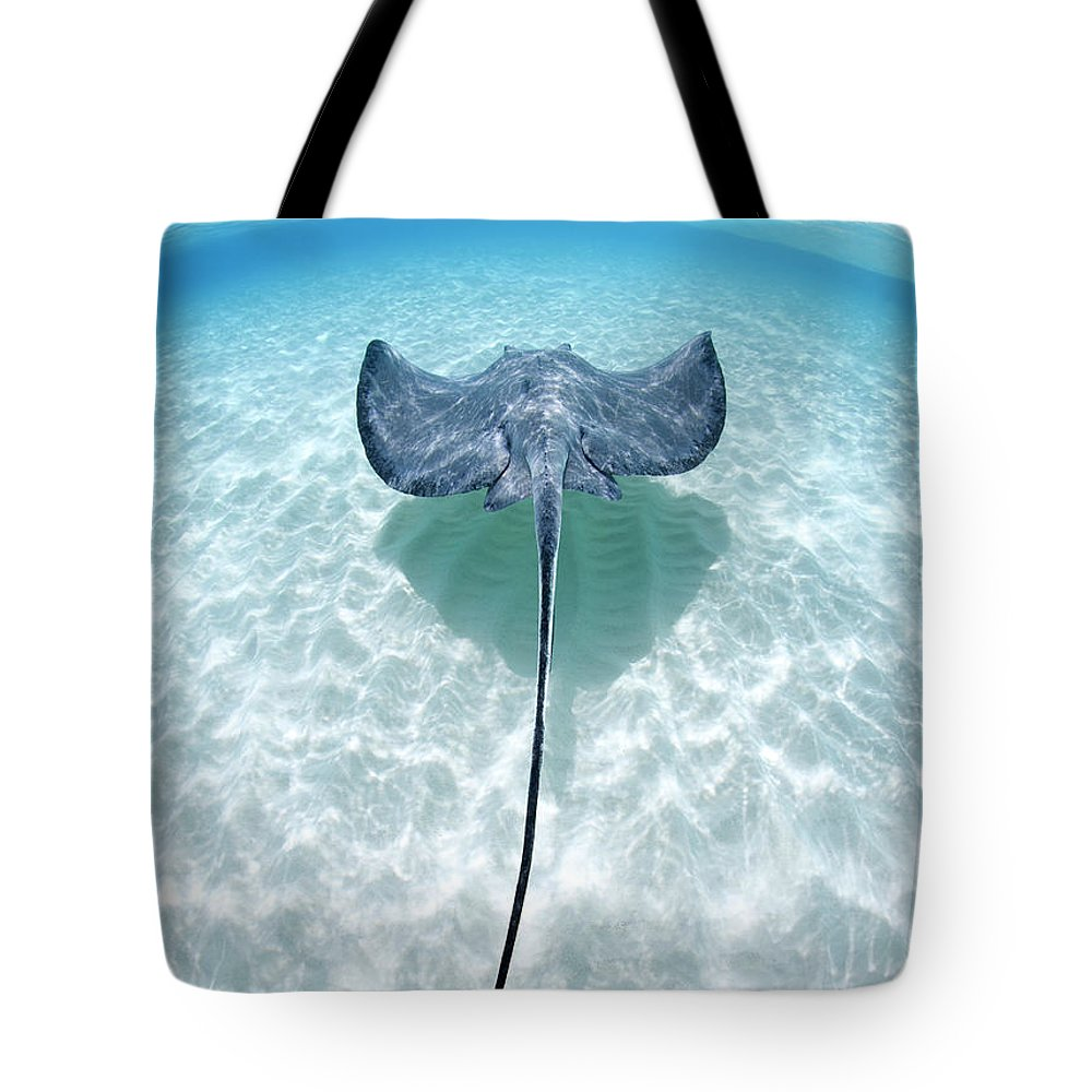 Underwater Tote Bag featuring the photograph Southern Stingray Cayman Islands by Justin Lewis
