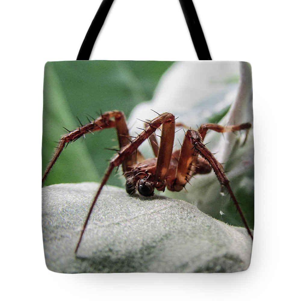 Spider Tote Bag featuring the photograph Spider by Dinesh Suthar