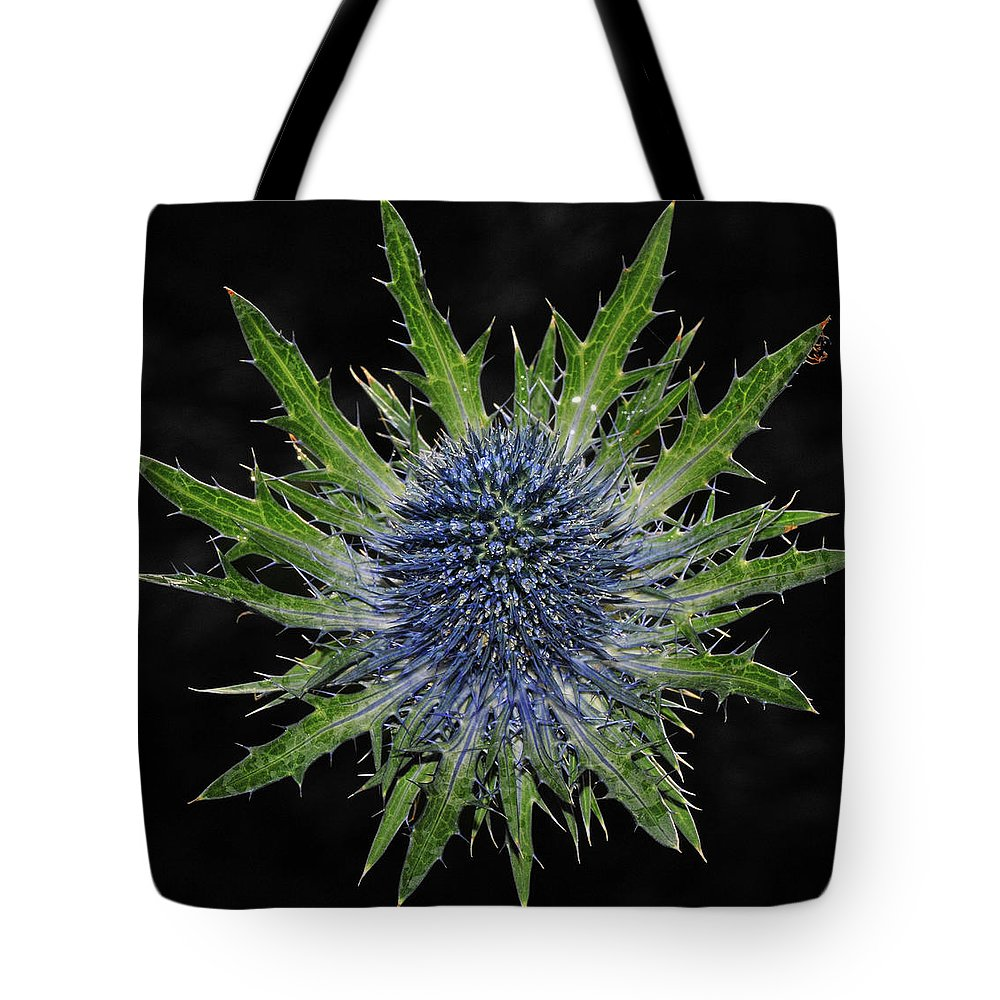 Insect Tote Bag featuring the photograph Spider by Love Photography