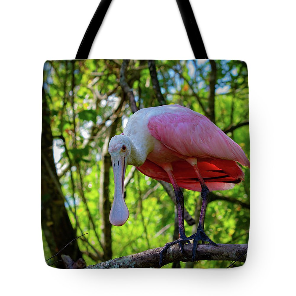 Spoonbill Tote Bag featuring the photograph Spoonbill by Blair Howell