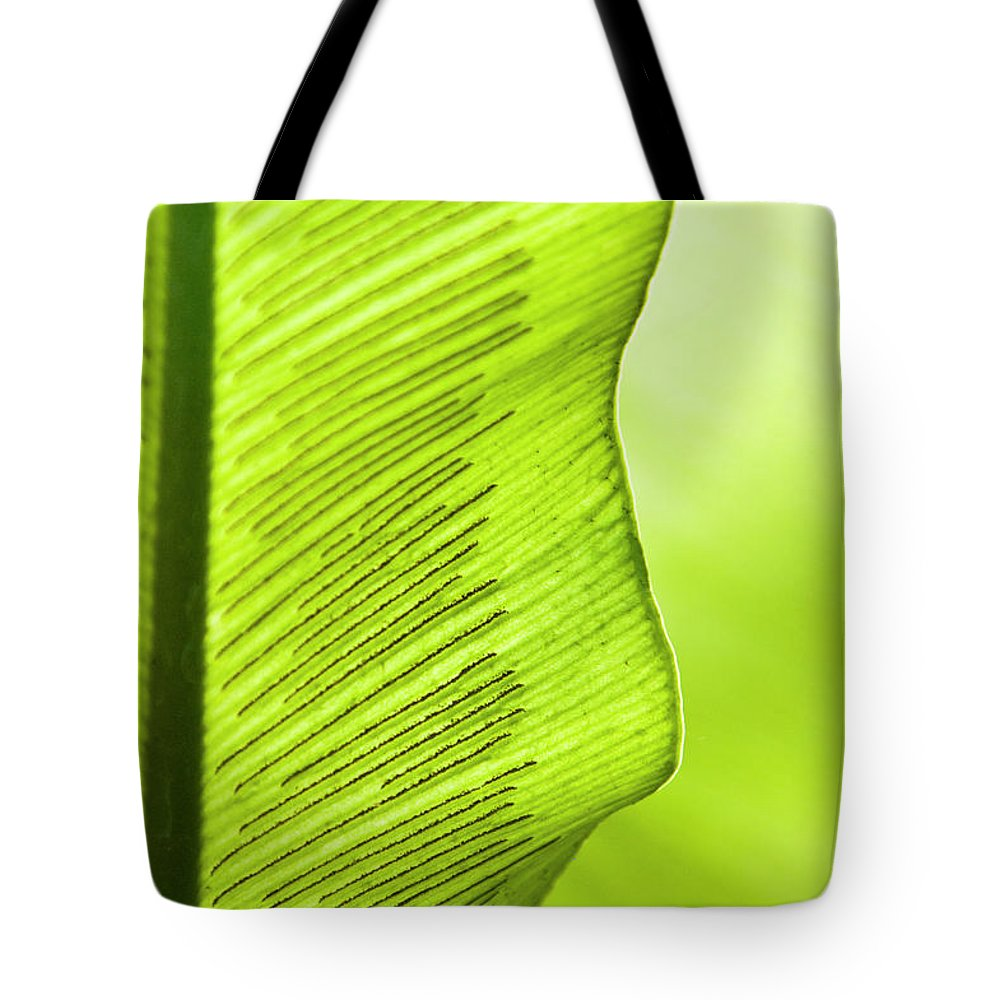 Outdoors Tote Bag featuring the photograph Spores Of A Fern by By Ken Ilio