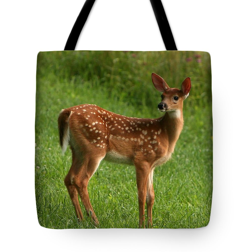 Grass Tote Bag featuring the photograph Spotted Fawn by Spiraling Road Photography