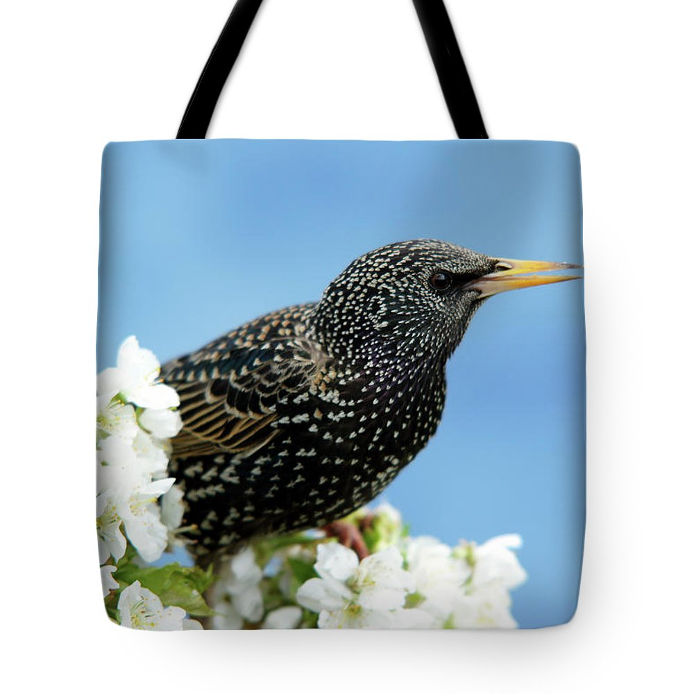 Songbird Tote Bag featuring the photograph Star In Springtime by Schnuddel