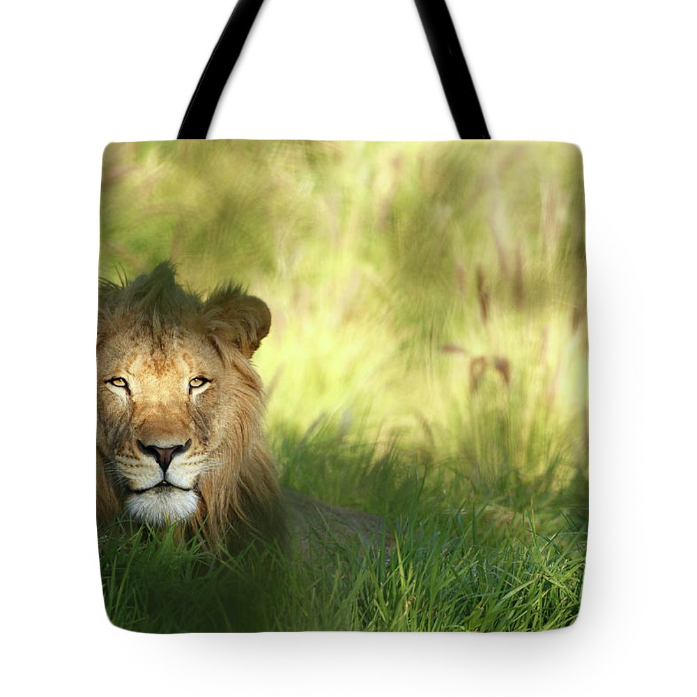 Tropical Rainforest Tote Bag featuring the photograph Staring Lion In Field Of Grass With by Jimkruger