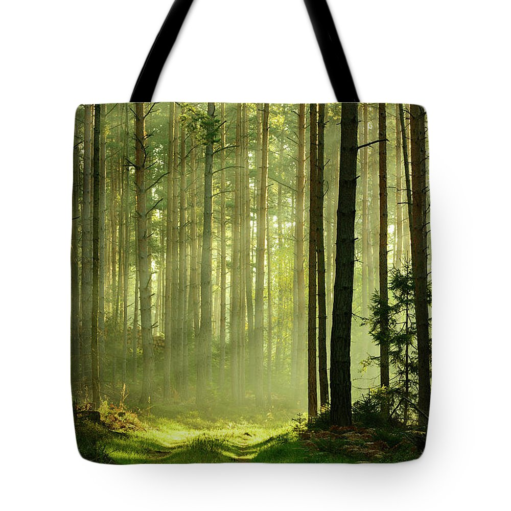 Scenics Tote Bag featuring the photograph Sunbeams Breaking Through Pine Tree by Avtg
