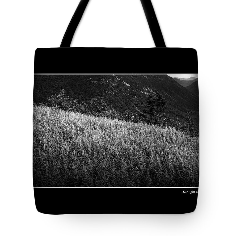 Fern Tote Bag featuring the photograph Sunlight On Ferns Poster by Wayne King