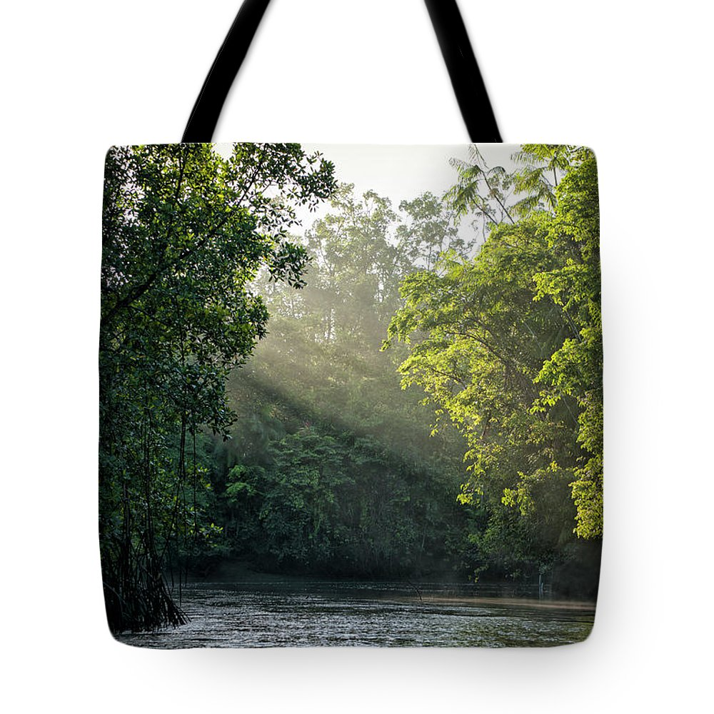Tropical Rainforest Tote Bag featuring the photograph Sunlight Shining Through Trees On River by Brasil2