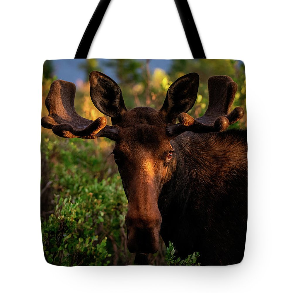 Moose Tote Bag featuring the photograph Sunrise In The Eye Of A Young Bull by Gary Kochel