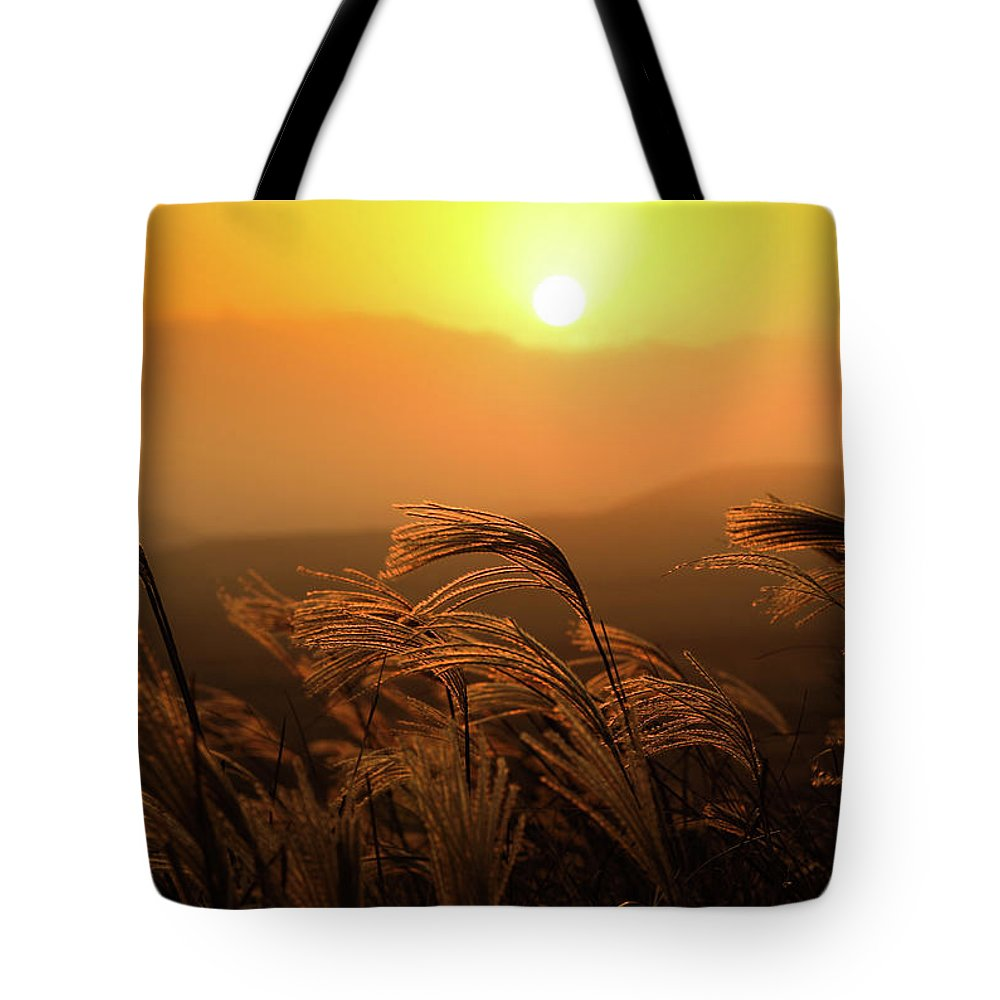 Tranquility Tote Bag featuring the photograph Sunset, Reeds And Wind by Douglas Macdonald