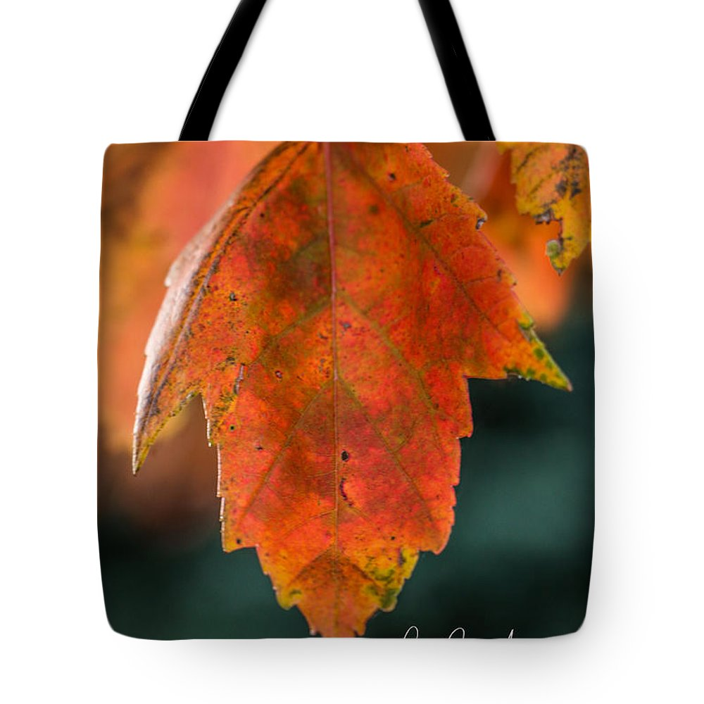 Leaf Tote Bag featuring the photograph Sunshine On My Shoulder by Connie Allen