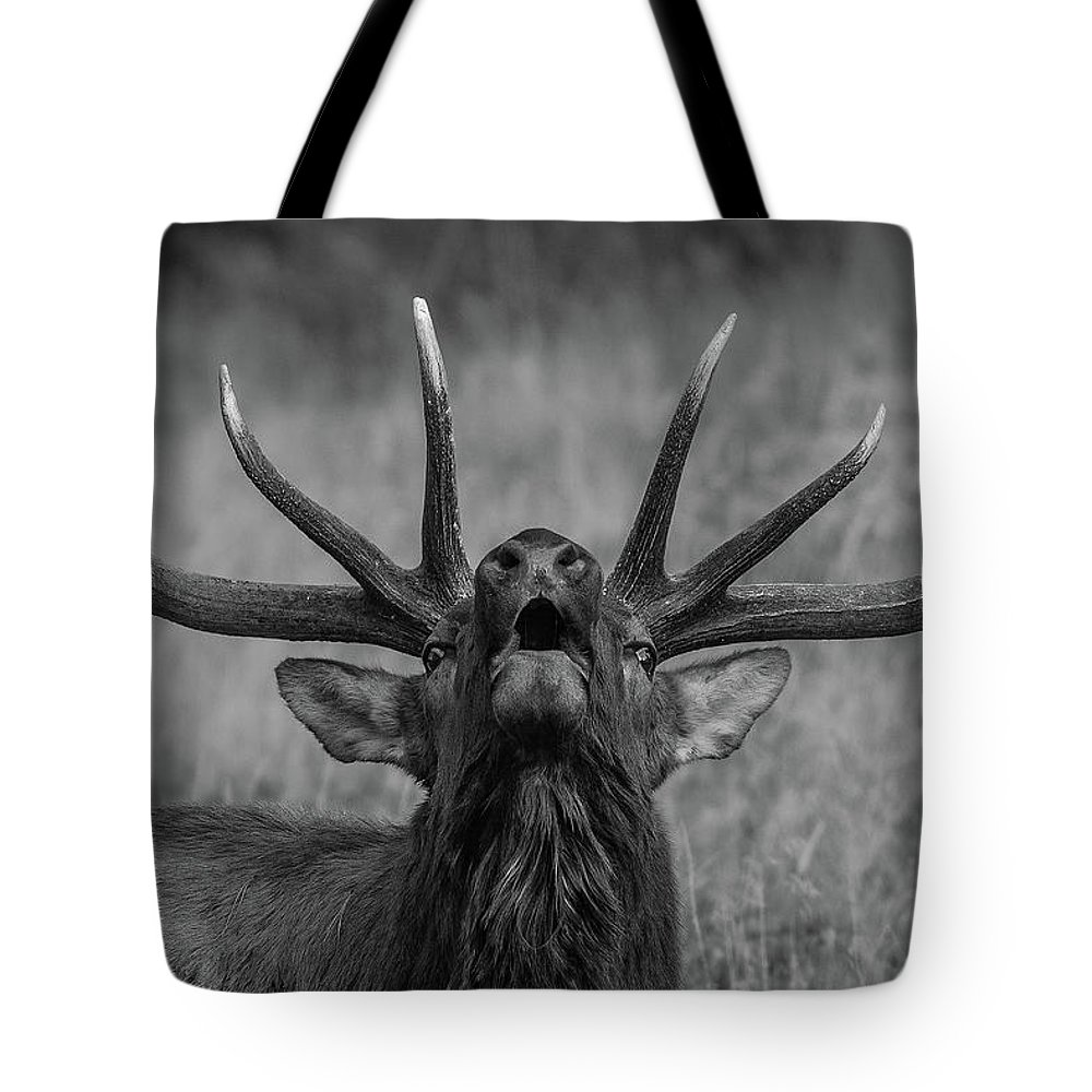 Elk Tote Bag featuring the photograph Symmetry by Gary Kochel