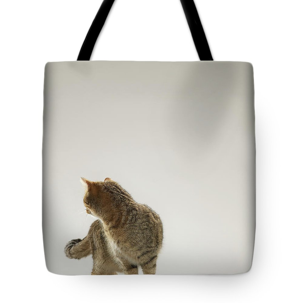 Pets Tote Bag featuring the photograph Tabby Cat Looking Behind by Michael Blann