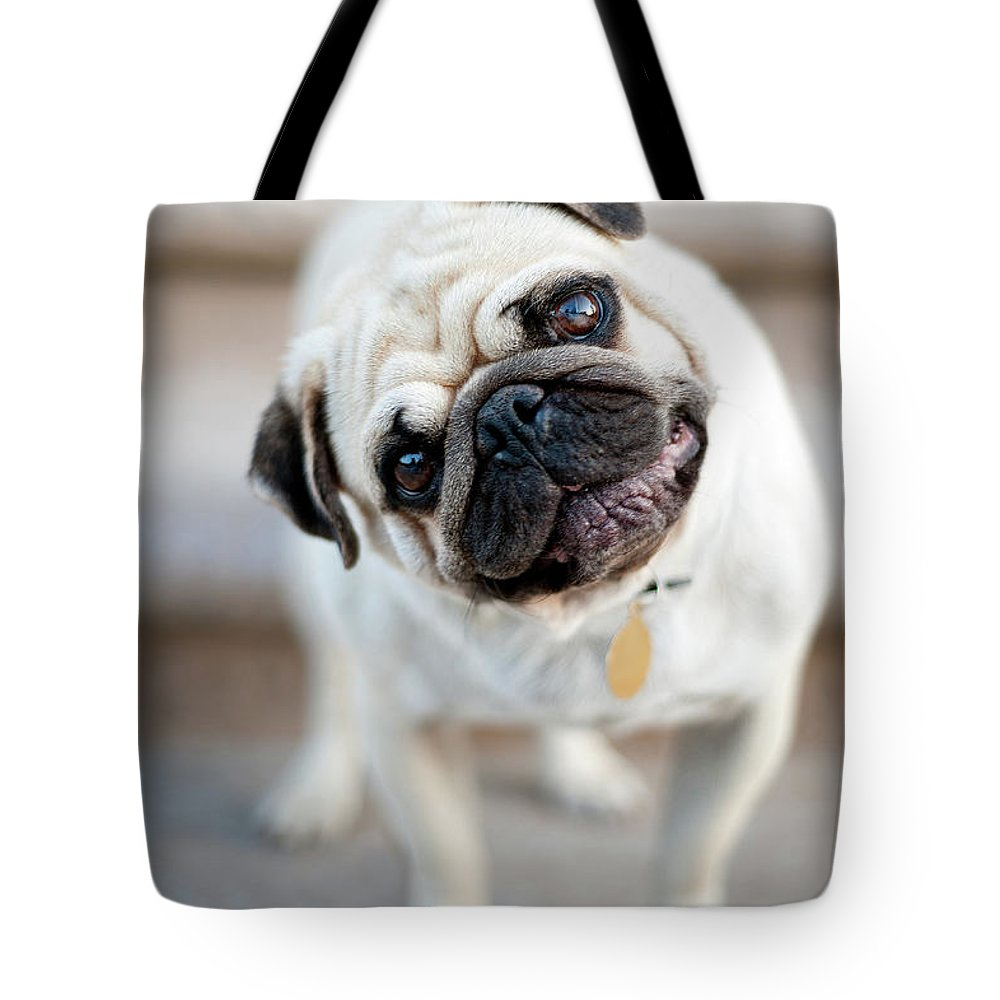 Pets Tote Bag featuring the photograph Tan & Black Pug Dog Tilting Head by Alex Sotelo