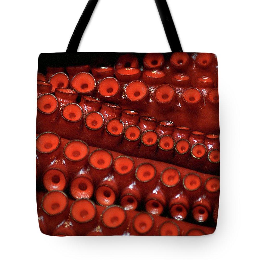 Animal Themes Tote Bag featuring the photograph Tentacles,tsukiji Fish Market by Jason Quick