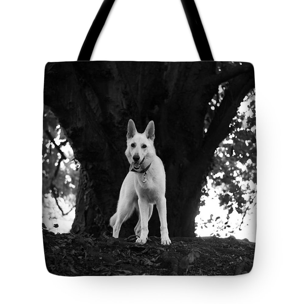 Dog Tote Bag featuring the photograph The Dog And The Tree by Veronique Dubois