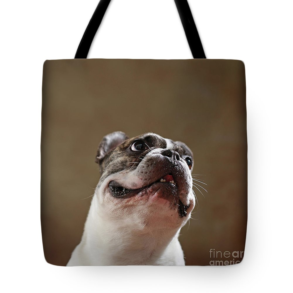 Look Tote Bag featuring the photograph The Look by Jana Behr