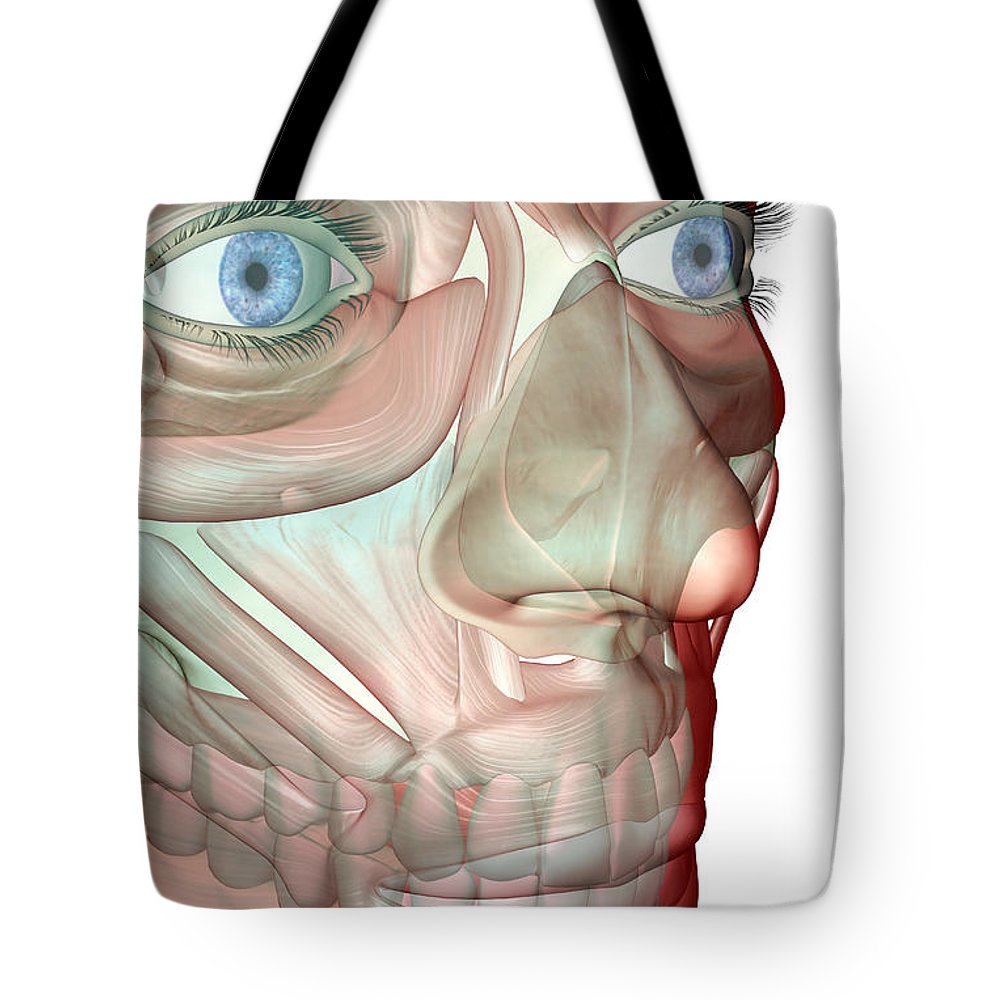 White Background Tote Bag featuring the digital art The Musculoskeleton Of The Face by Medicalrf.com