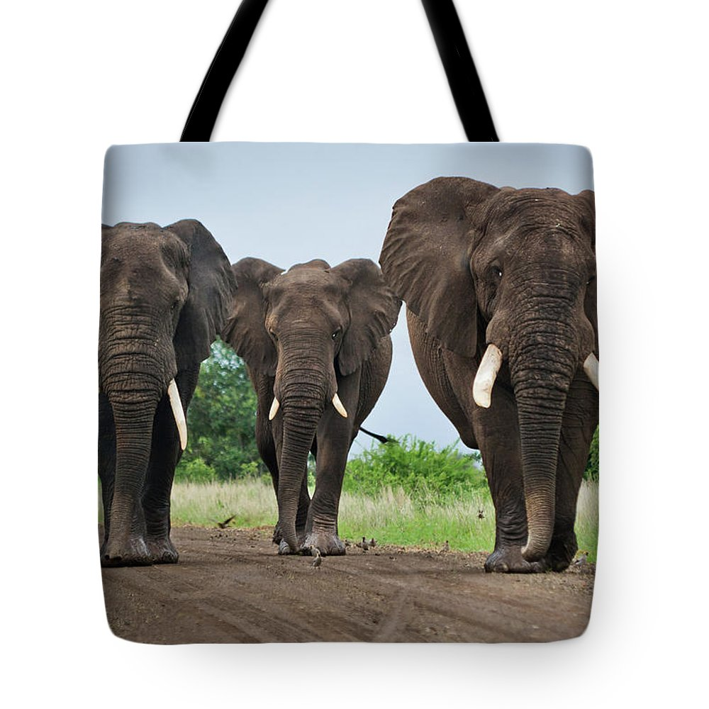 Toughness Tote Bag featuring the photograph Three Big Elephants On A Dirt Road by Johansjolander
