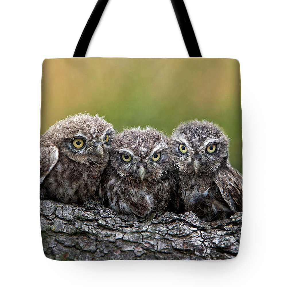 Bird Of Prey Tote Bag featuring the photograph Three Grimly Goblins by Michael Milfeit
