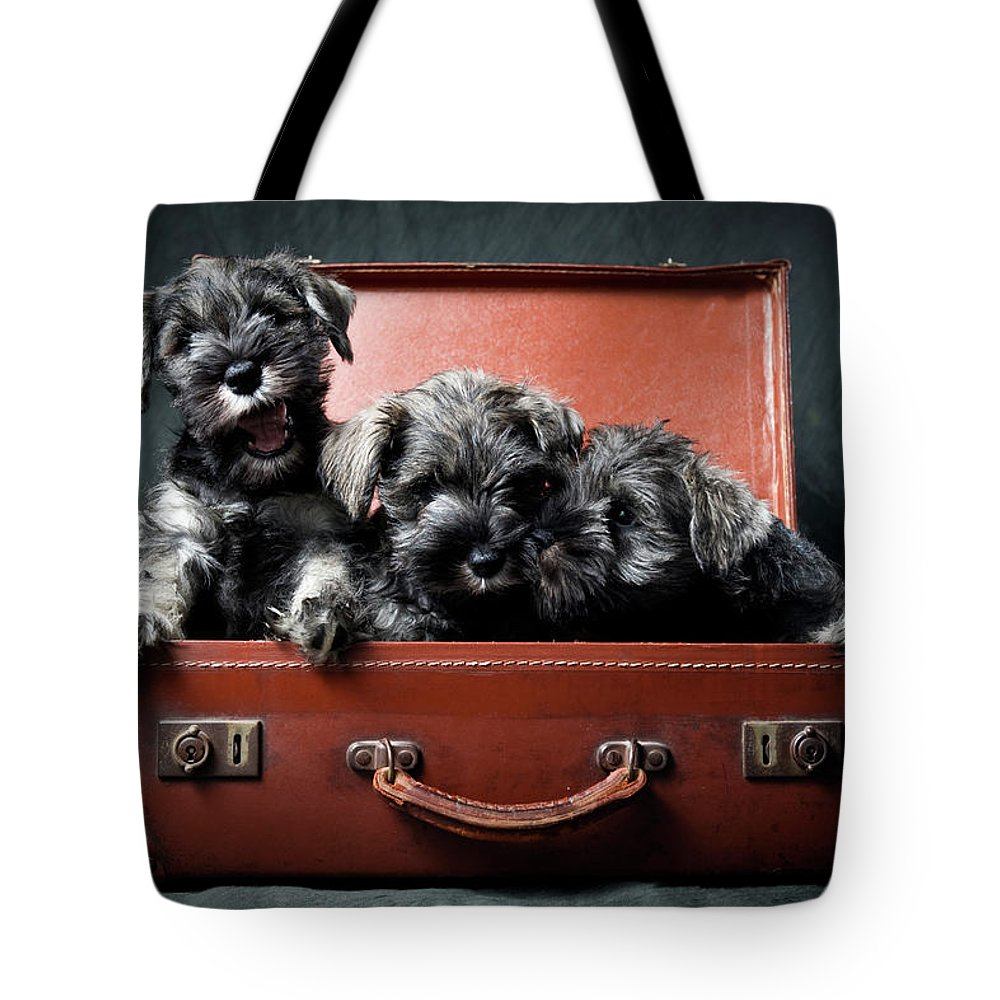 Pets Tote Bag featuring the photograph Three Miniature Schnauzer Puppies In by Steve Collins / Momofoto
