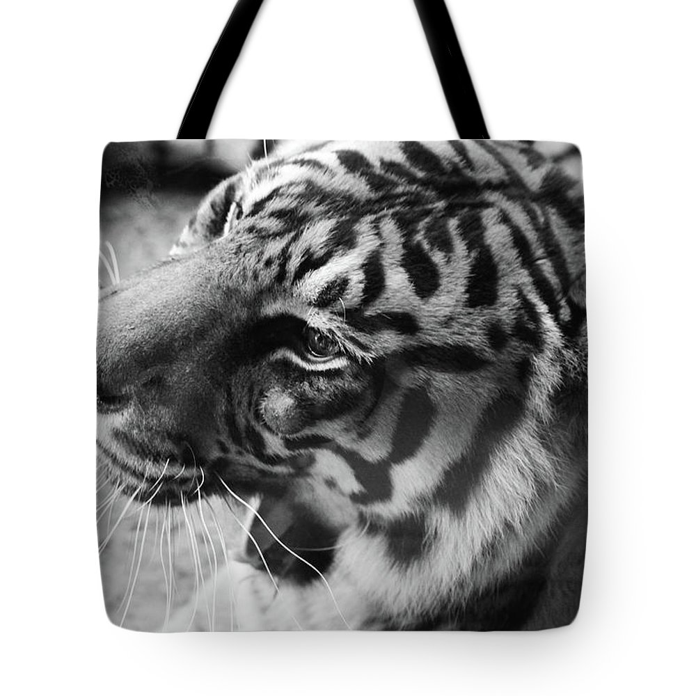 Tiger Tote Bag featuring the photograph Tiger In Rest by Alina Avanesian