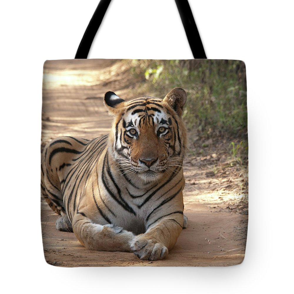 Ranthambore National Park Tote Bag featuring the photograph Tiger Sitting On Field by Chaithanya Krishna Photography