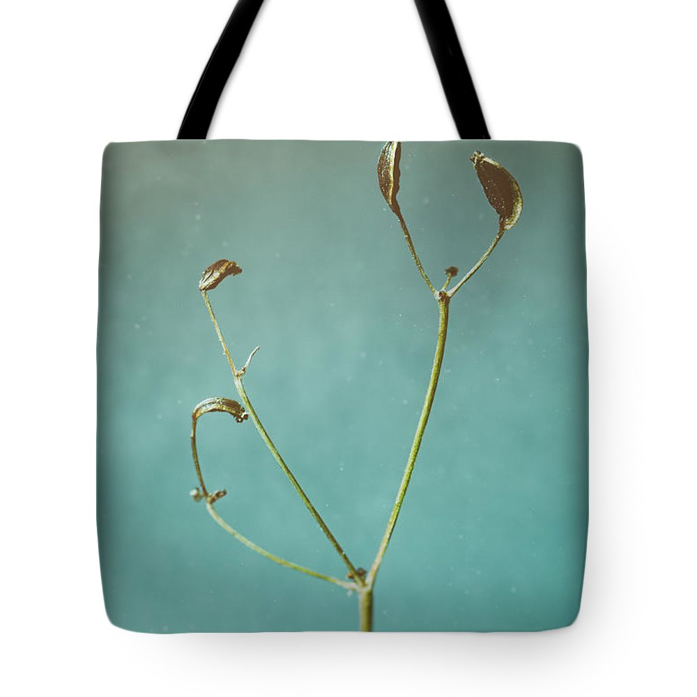 Dill Tote Bag featuring the photograph Tiny Seed Pod by Scott Norris