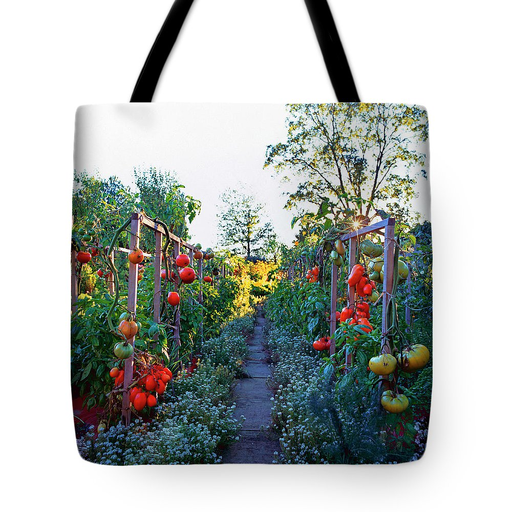Community Garden Tote Bag featuring the photograph Tomatoes On Frames by Richard Felber