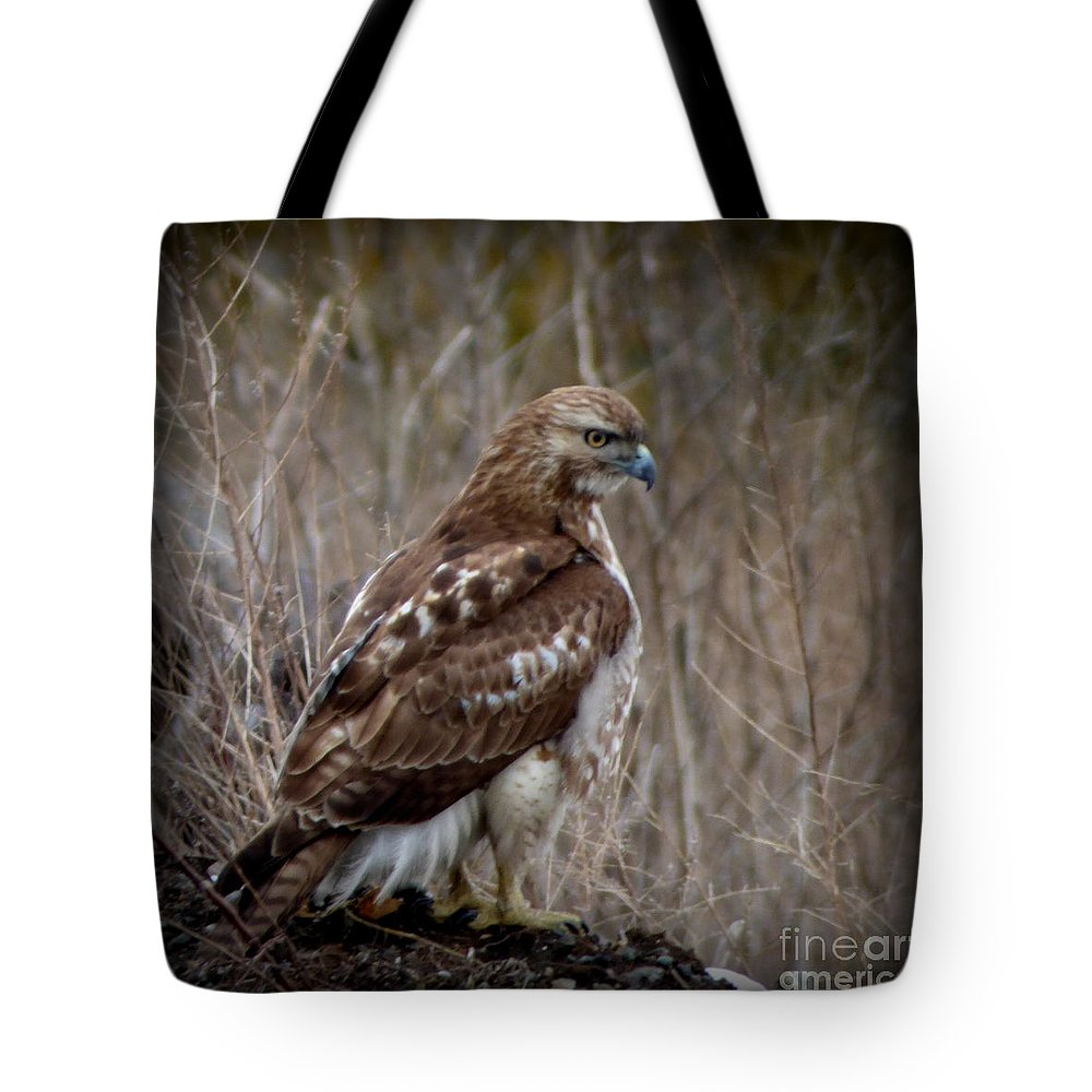 Tote Bag featuring the photograph Totem Animal Book Hawk by Laura Atkinson
