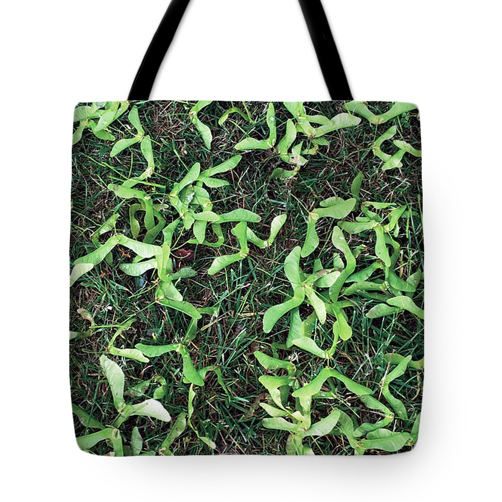 Photo Tote Bag featuring the photograph Tree Seeds by Vanessa MacKinnon