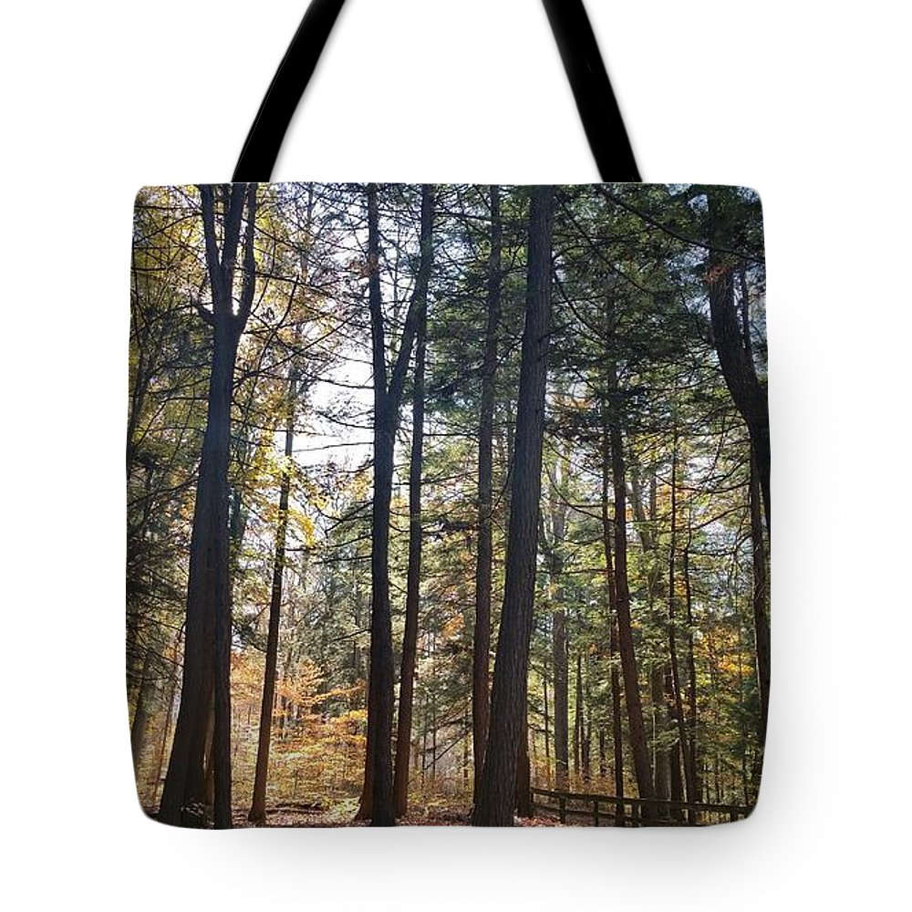 Trees Tote Bag featuring the photograph Trees And Shadows 2 by Seamus Pinder