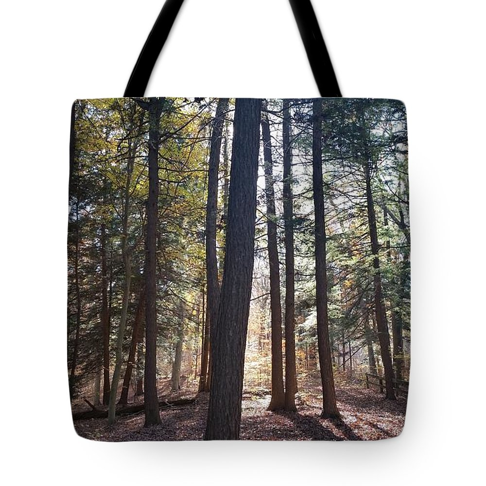Trees Tote Bag featuring the photograph Trees And Shadows by Seamus Pinder