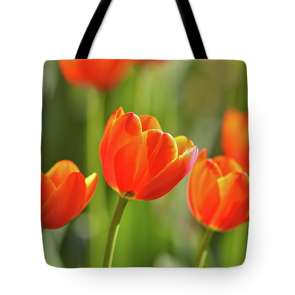 Flowerbed Tote Bag featuring the photograph Tulip by Ithinksky