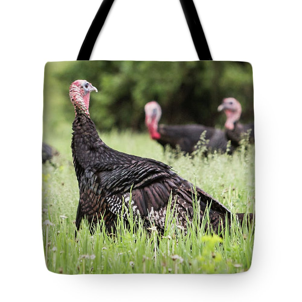 Turkey Tote Bag featuring the photograph Turkey Flock by Patti Deters