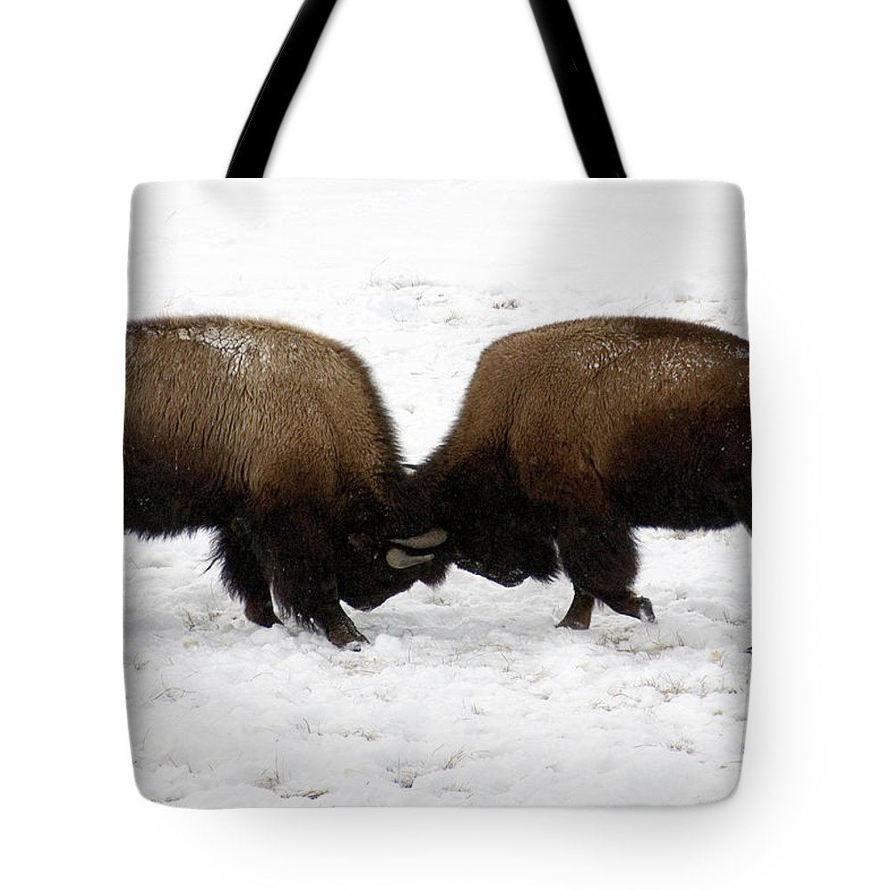 Snow Tote Bag featuring the photograph Two Bison Fighting by Mark Newman