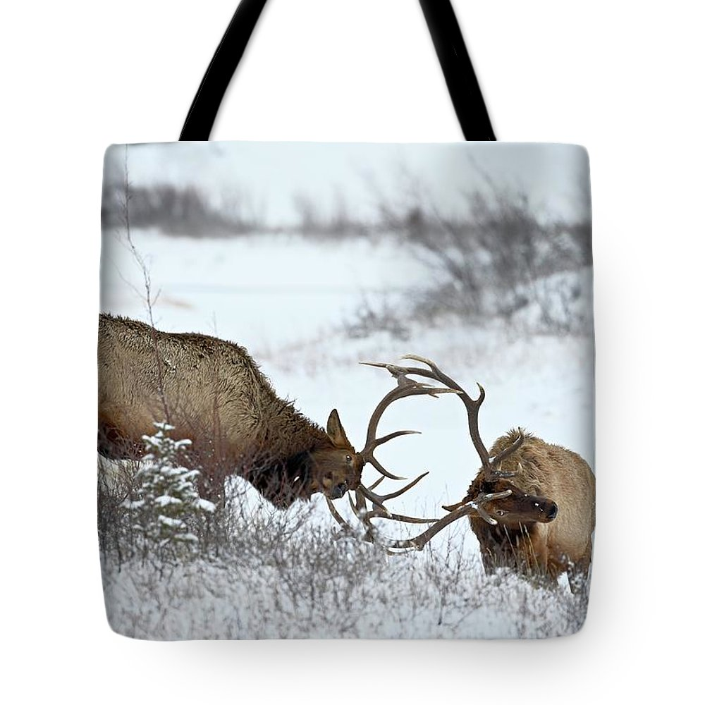 Snow Tote Bag featuring the photograph Two Bull Elk Cervus Canadensis Sparring by James Hager / Robertharding