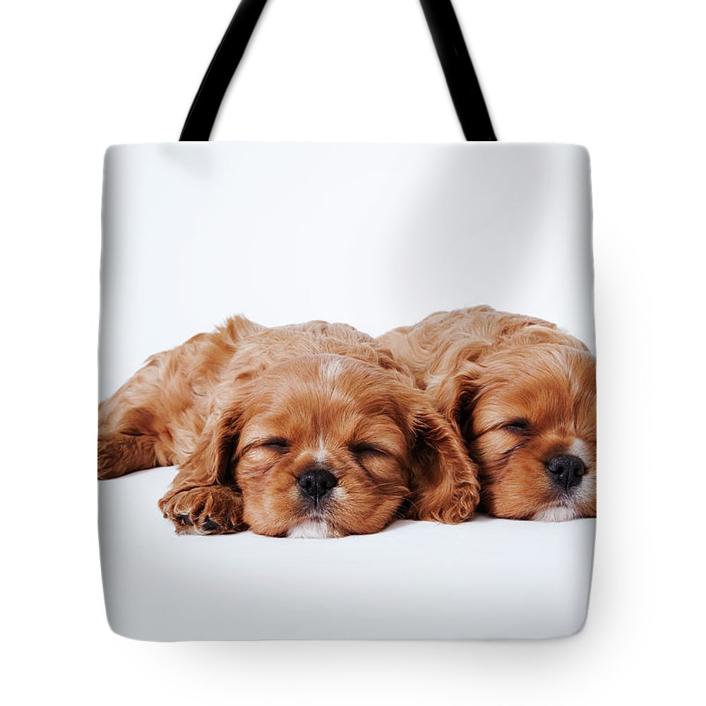 Pets Tote Bag featuring the photograph Two Cavalier King Charles Spaniel by Martin Harvey