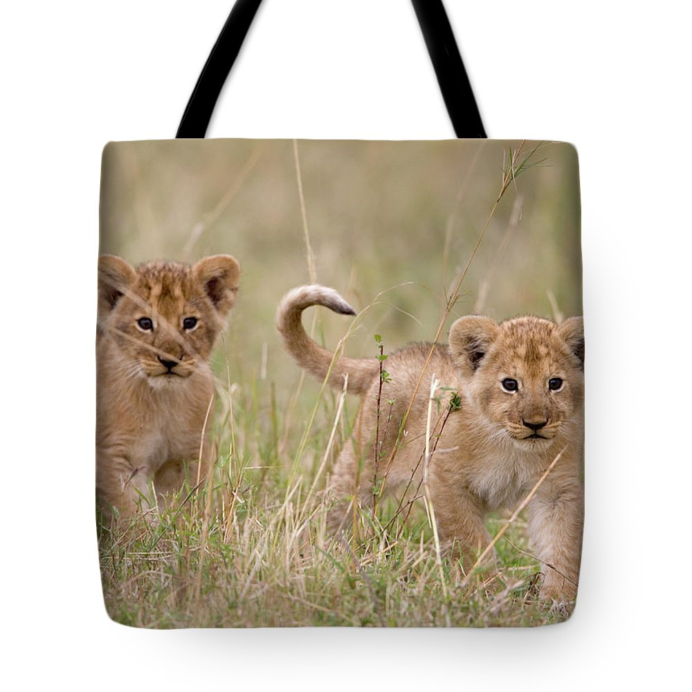 Kenya Tote Bag featuring the photograph Two Lion Panthera Leo Cubs Walking by Paul Souders