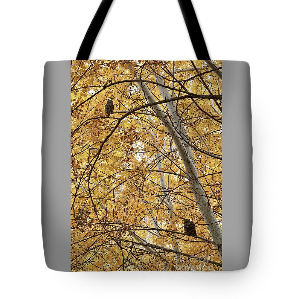 Owl Tote Bag featuring the photograph Two Owls In Autumn Tree by Carol Groenen